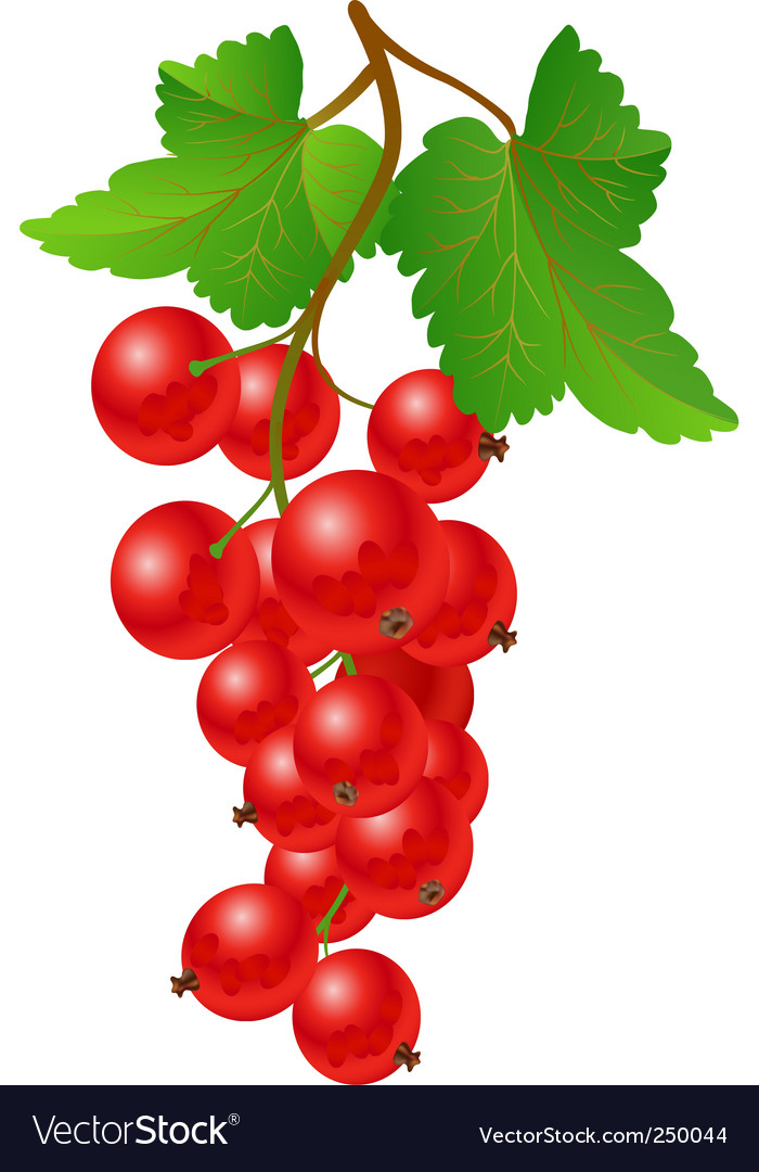 Currant red on bench vector | Price: 1 Credit (USD $1)