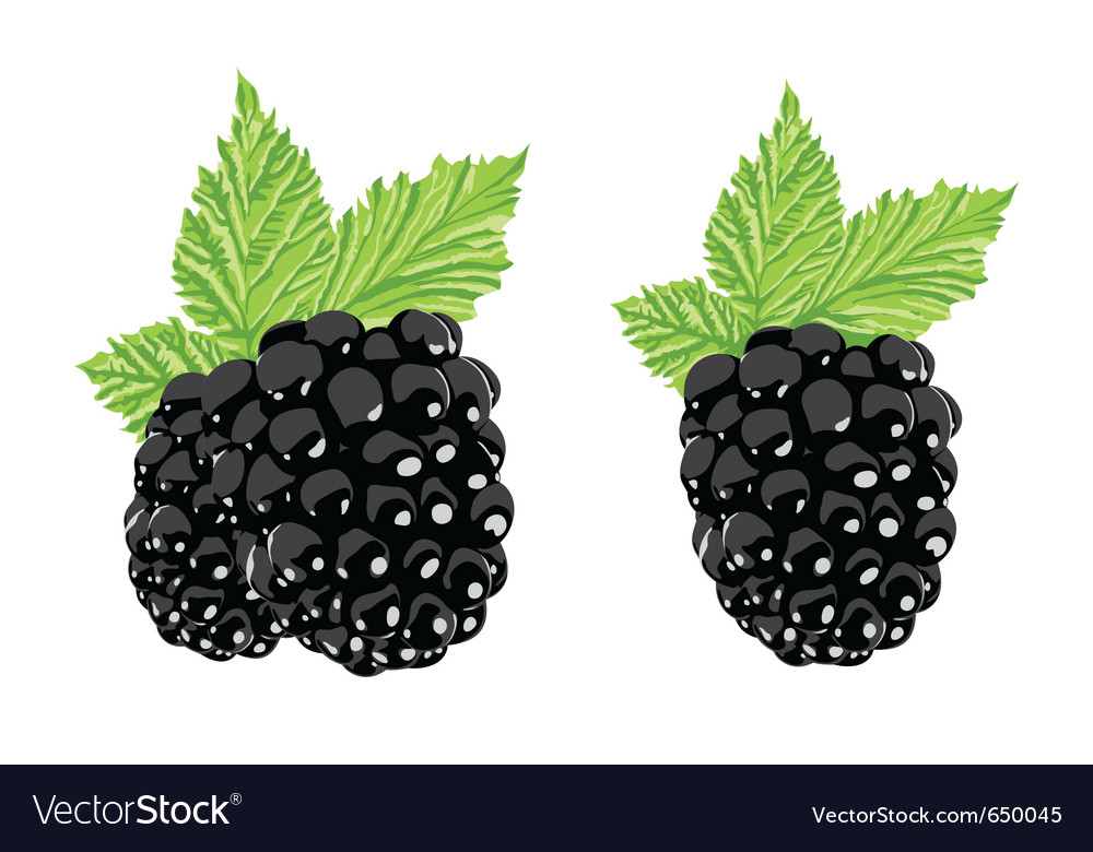 Berry vector | Price: 1 Credit (USD $1)