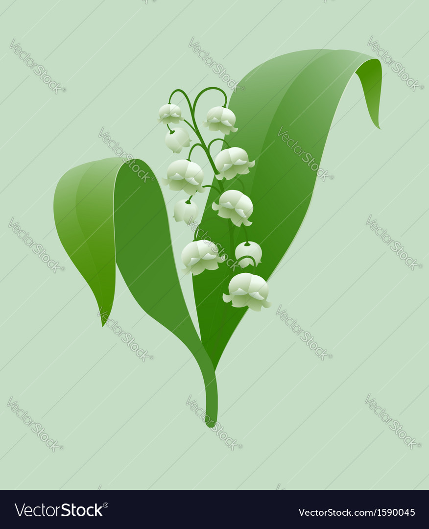 Lily of the valley vector | Price: 1 Credit (USD $1)