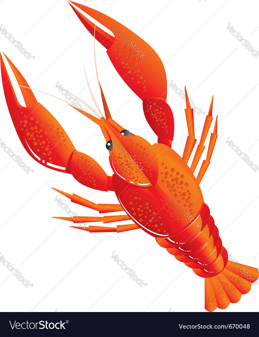 Boiled crawfish vector | Price: 1 Credit (USD $1)
