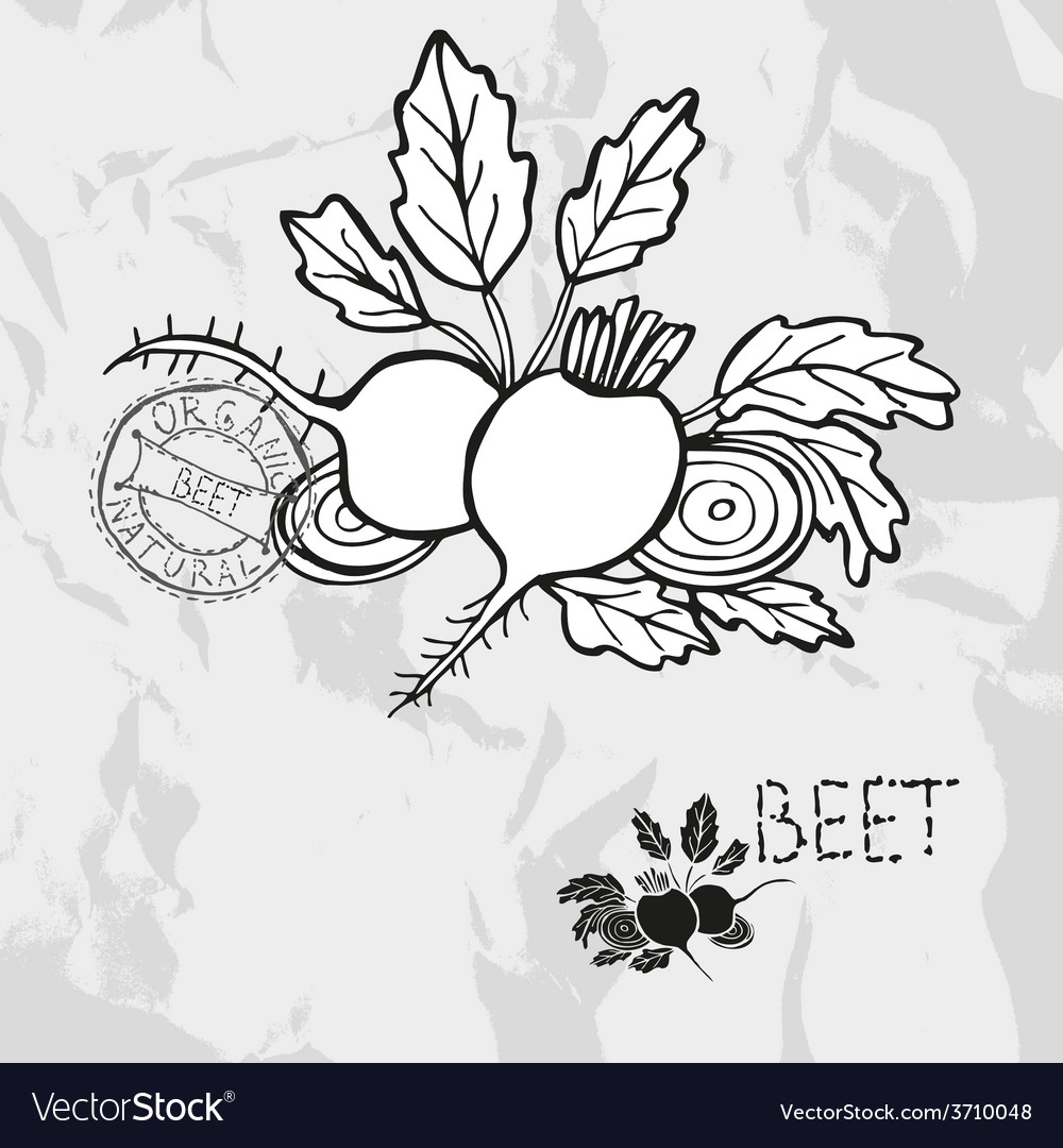 Hand drawn whole and sliced beet vector | Price: 1 Credit (USD $1)