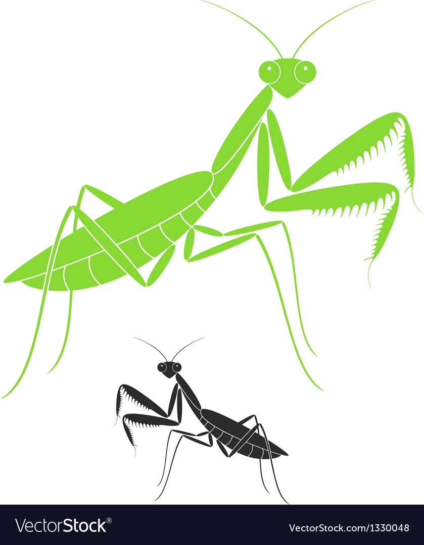 Praying mantis vector | Price: 1 Credit (USD $1)
