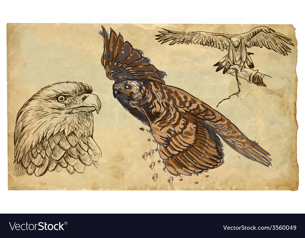 Animals theme birds of prey - hand drawn pack vector | Price: 3 Credit (USD $3)