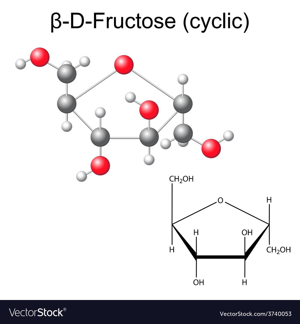 Structural chemical formula and model of fructose vector | Price: 1 Credit (USD $1)