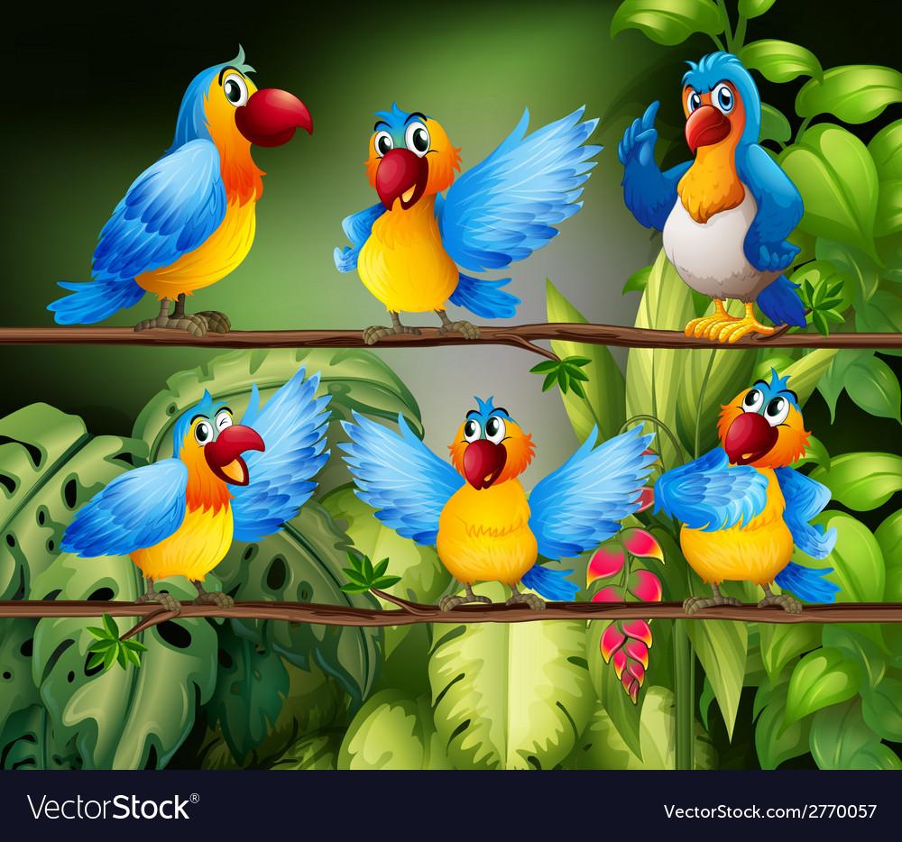Parrots vector | Price: 1 Credit (USD $1)