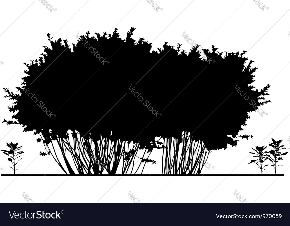 Bush vector | Price: 1 Credit (USD $1)