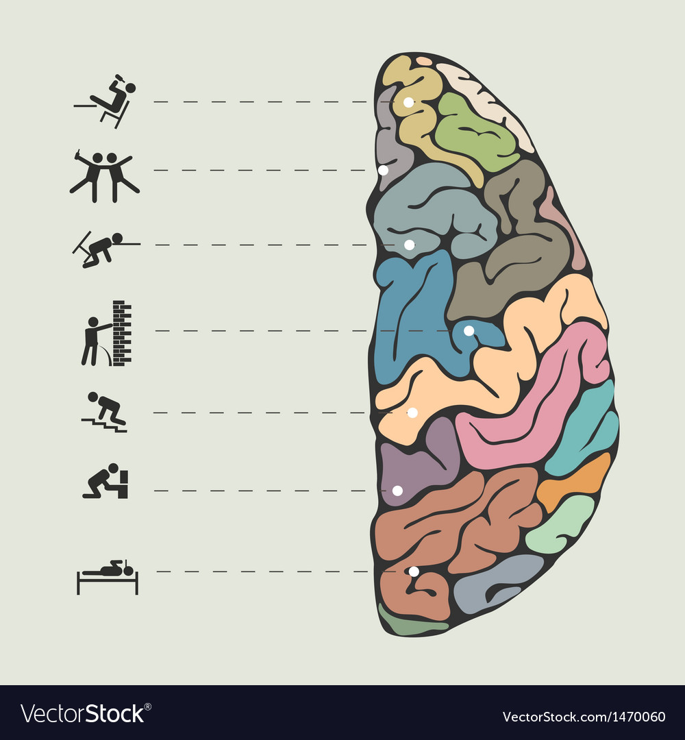 Funny concept of human brain vector | Price: 1 Credit (USD $1)