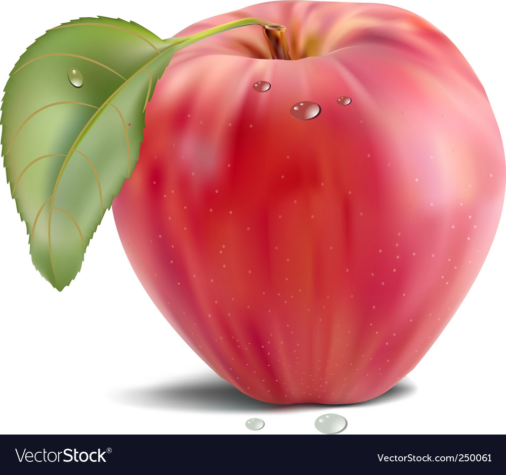 Apple and leaf vector | Price: 3 Credit (USD $3)