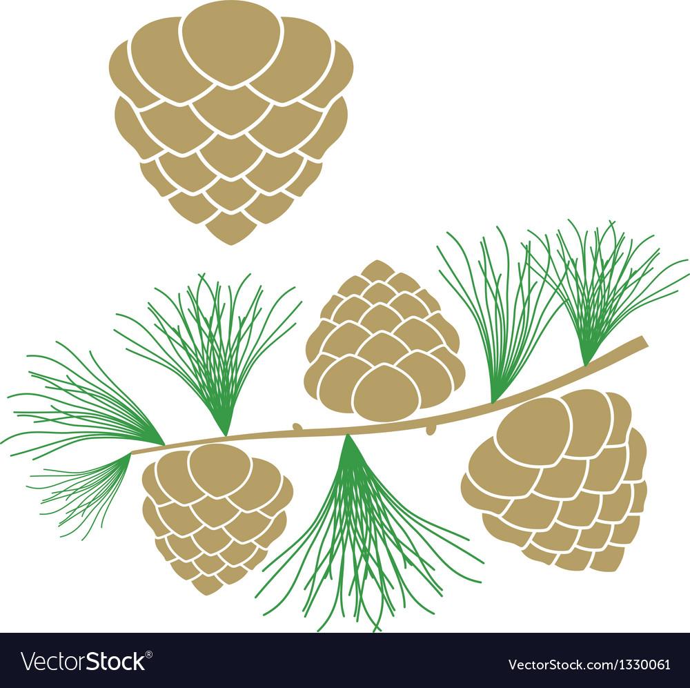 Pine cone larch tree vector | Price: 1 Credit (USD $1)