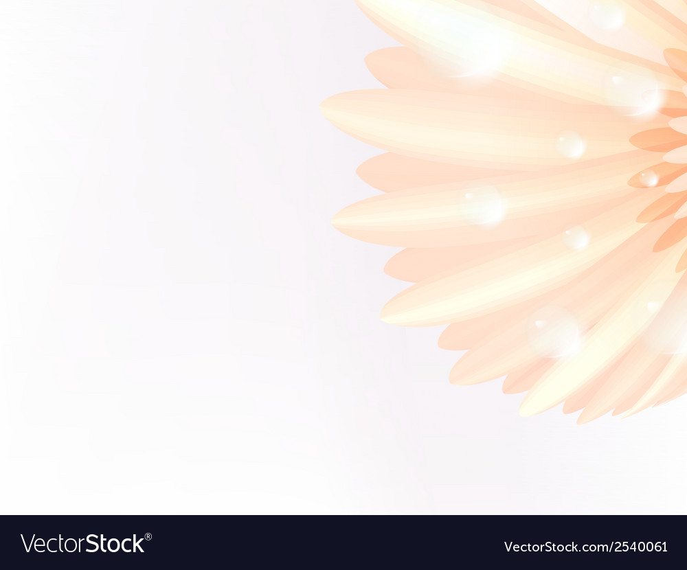 Water drops on elegant gerbera petals plus eps10 vector | Price: 1 Credit (USD $1)