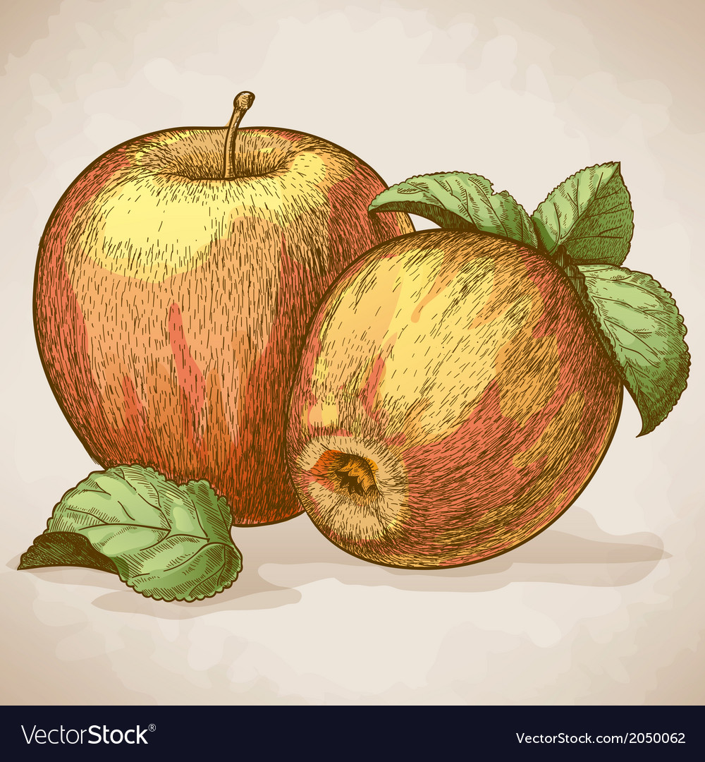 Engraving two apples retro style vector | Price: 1 Credit (USD $1)