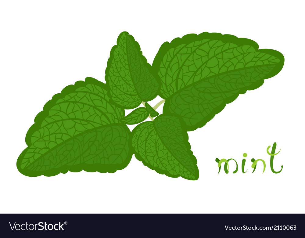 Green mint vector | Price: 1 Credit (USD $1)
