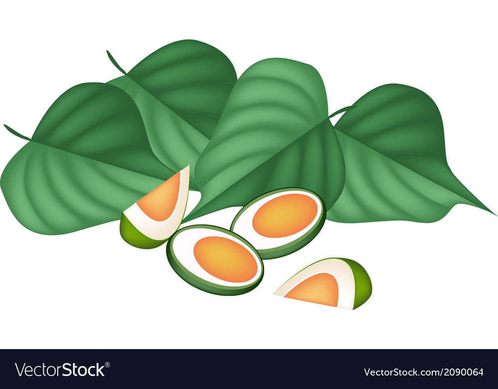Areca nuts and betel leaves on white background vector | Price: 1 Credit (USD $1)