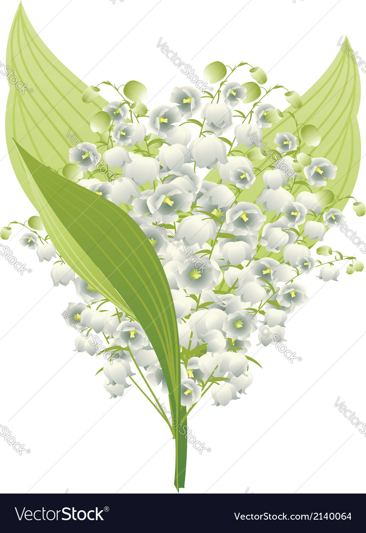 Lily of the valley5 vector | Price: 1 Credit (USD $1)