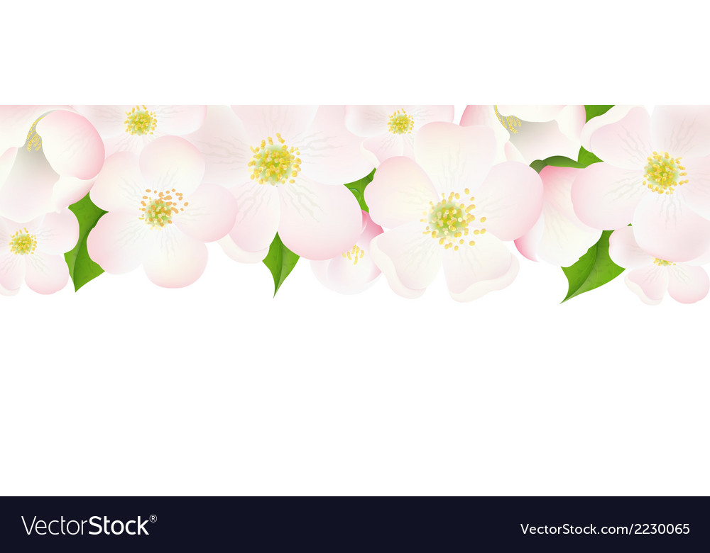 Apple tree flowers border vector | Price: 1 Credit (USD $1)