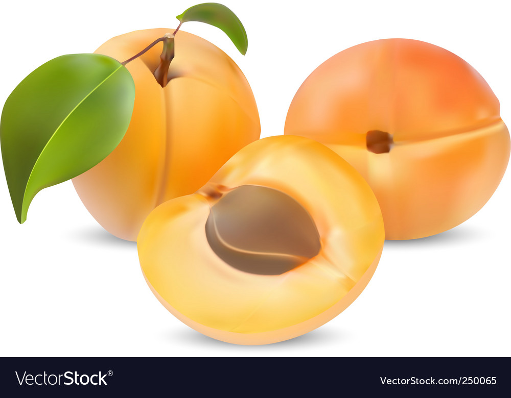 Apricot vector | Price: 3 Credit (USD $3)
