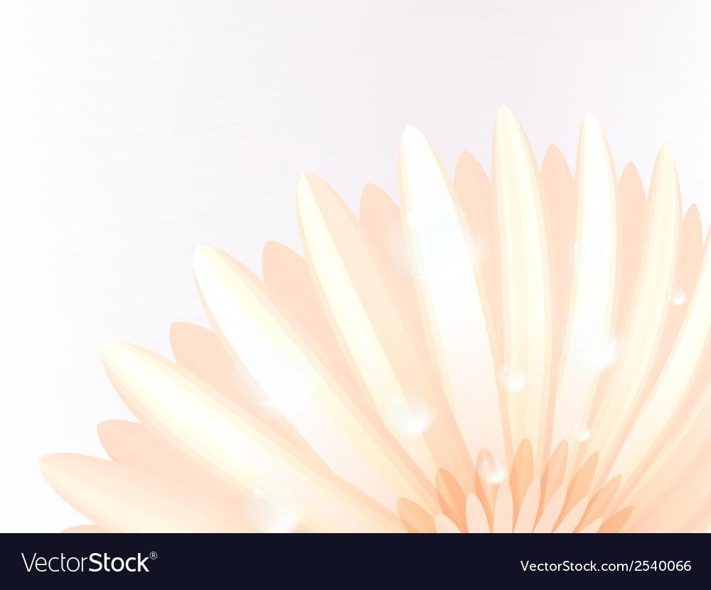 Water drops on elegant gerbera petals plus eps10 vector | Price: 1 Credit (USD $1)