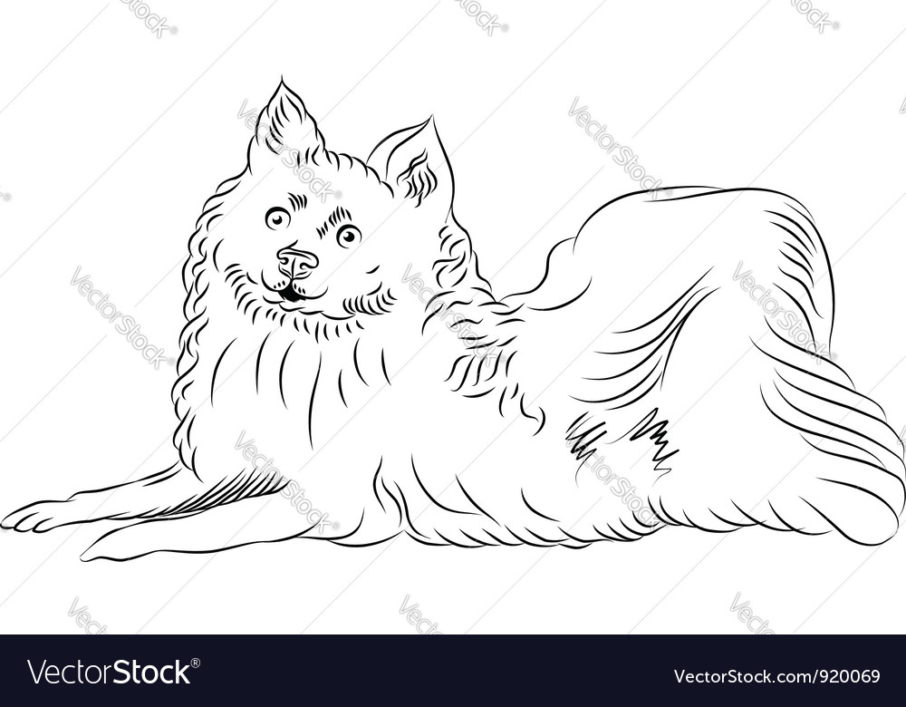 Sketch american eskimo dog breed lying vector | Price: 1 Credit (USD $1)