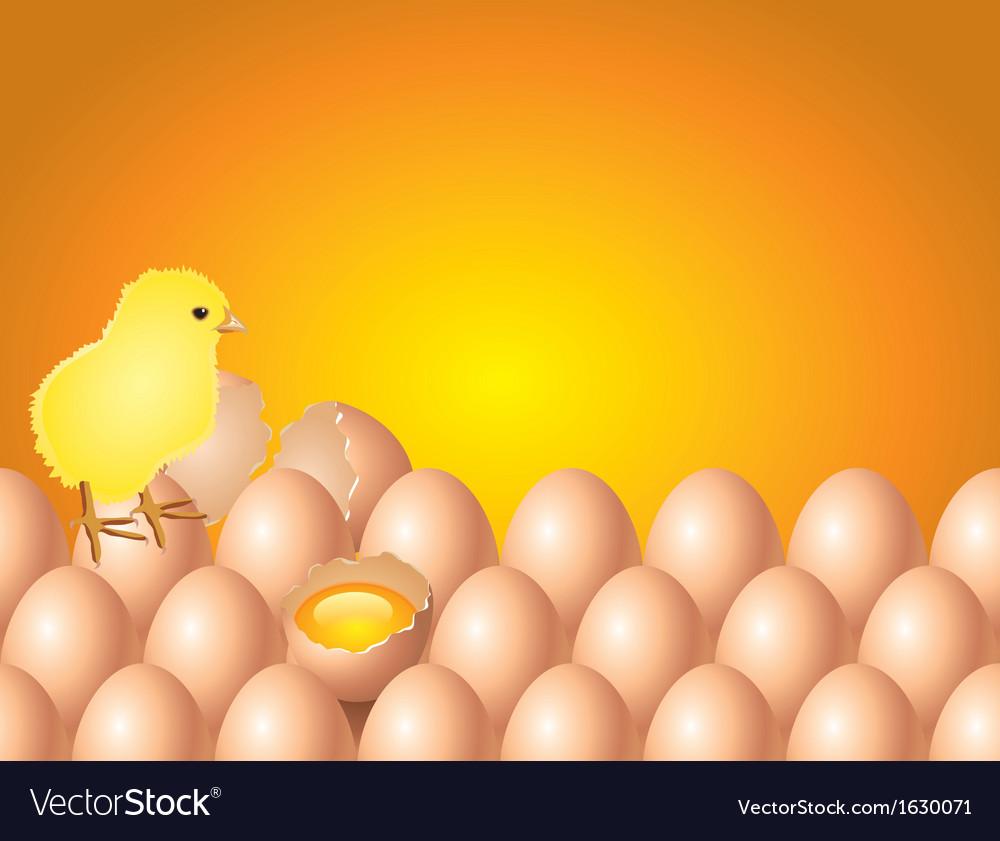 Chicken eggs background vector | Price: 1 Credit (USD $1)