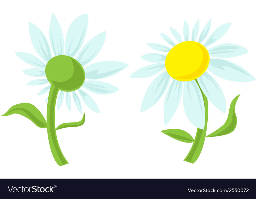 Daisy isolated vector | Price: 1 Credit (USD $1)