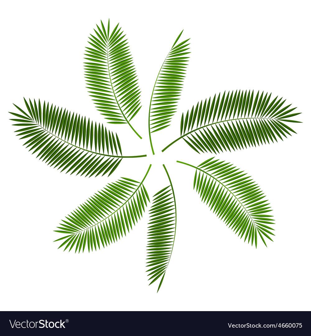 Palm leaf background vector | Price: 1 Credit (USD $1)