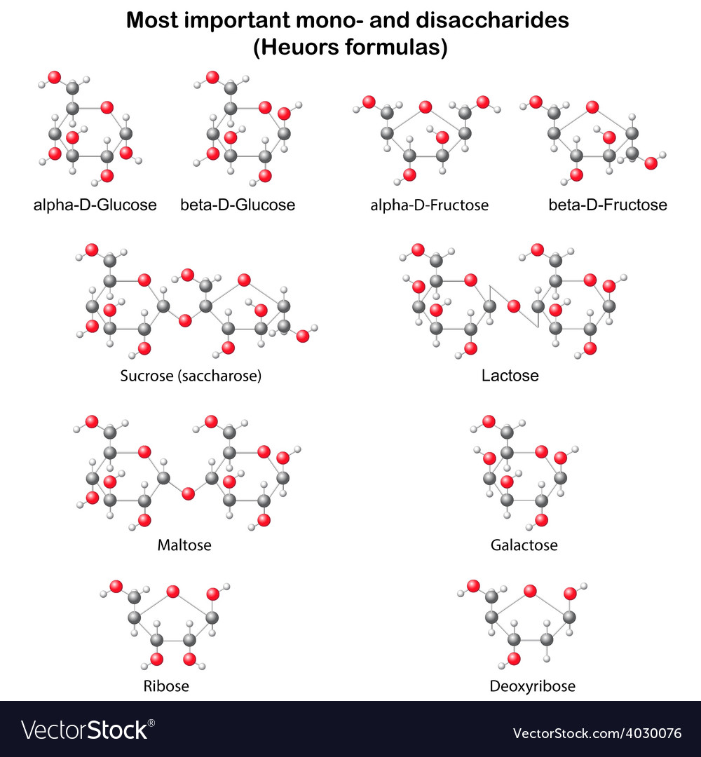 Chemical models of main mono and disaccharides vector