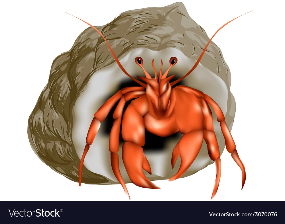 Hermit crab isolated vector | Price: 1 Credit (USD $1)