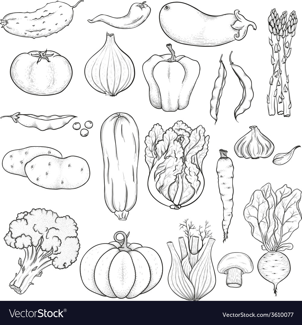 Big collection of vegetables vector | Price: 1 Credit (USD $1)