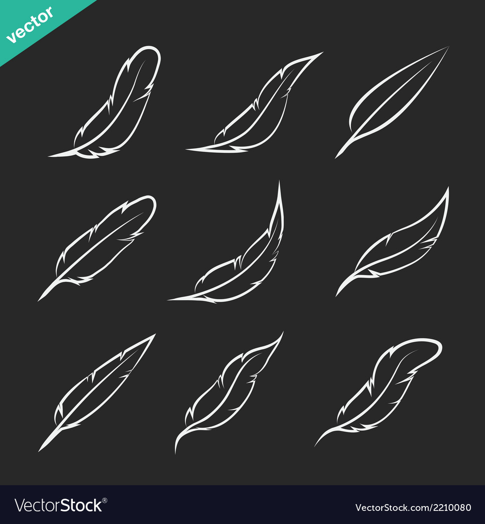 Group of feather vector | Price: 1 Credit (USD $1)