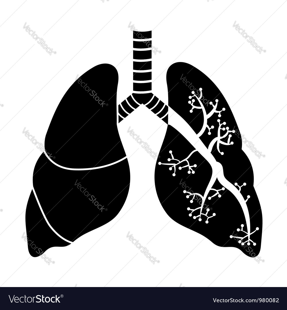 Lungs in black and white vector | Price: 1 Credit (USD $1)