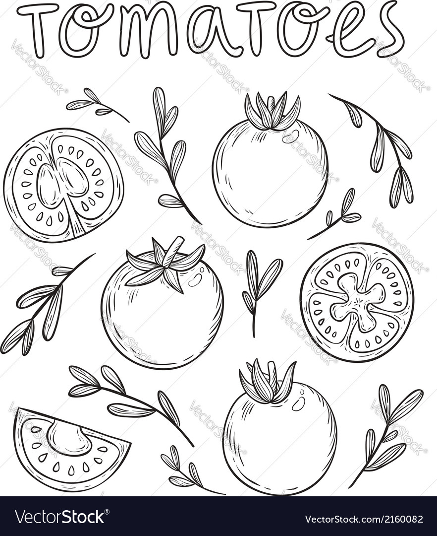 Sketched tomatoes vector | Price: 1 Credit (USD $1)