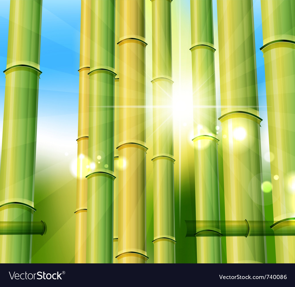 Bamboo nature background vector | Price: 1 Credit (USD $1)