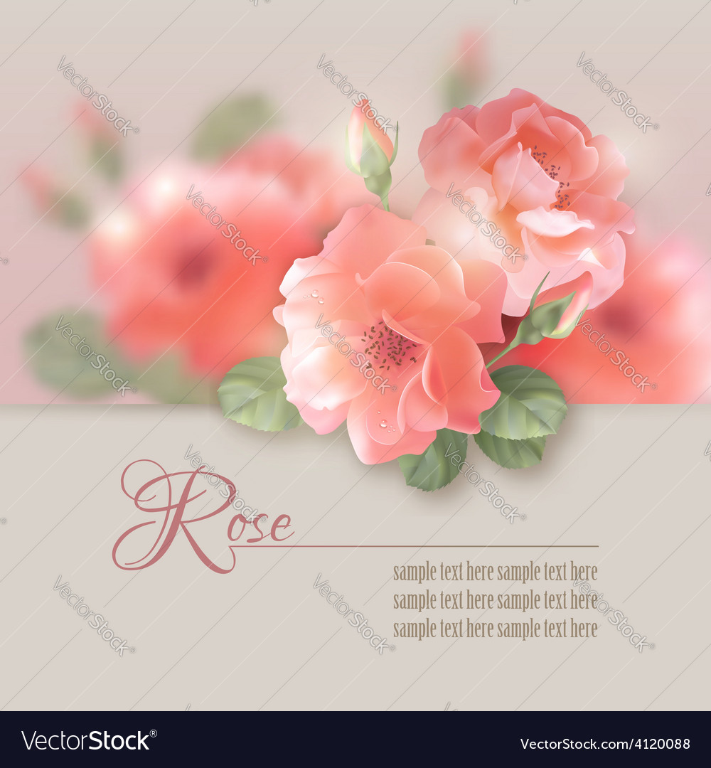 Card with flowers roses vector | Price: 3 Credit (USD $3)