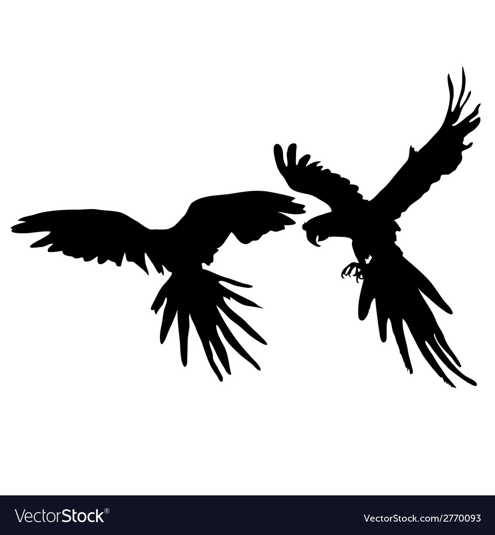 Parrot two black silhouette vector | Price: 1 Credit (USD $1)