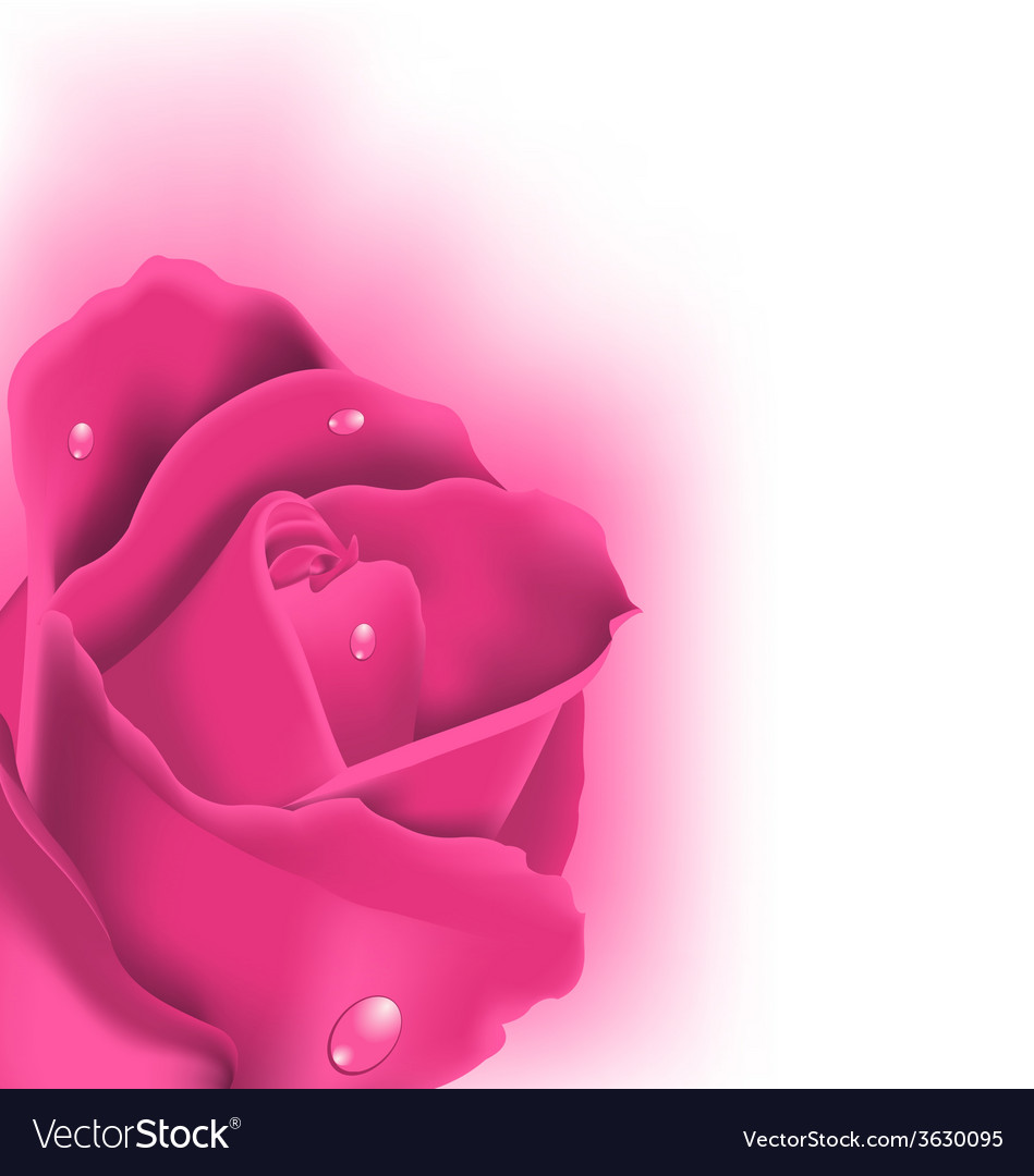 Celebration card with pink rose copy space for vector | Price: 1 Credit (USD $1)