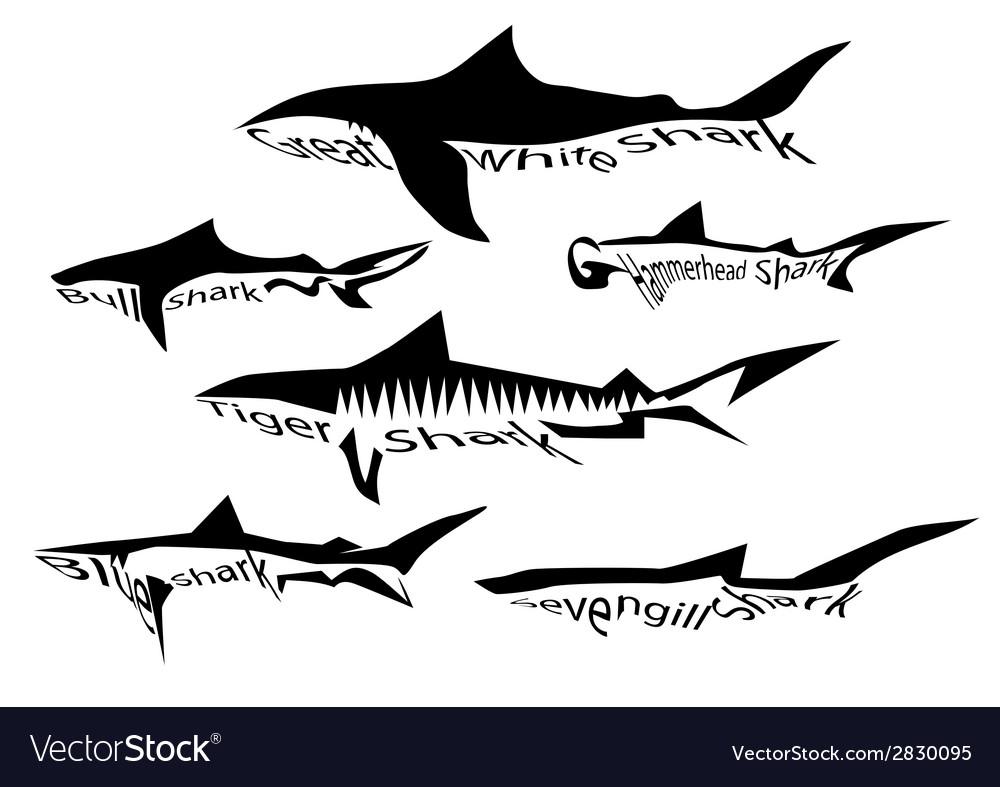 Shark species vector | Price: 1 Credit (USD $1)