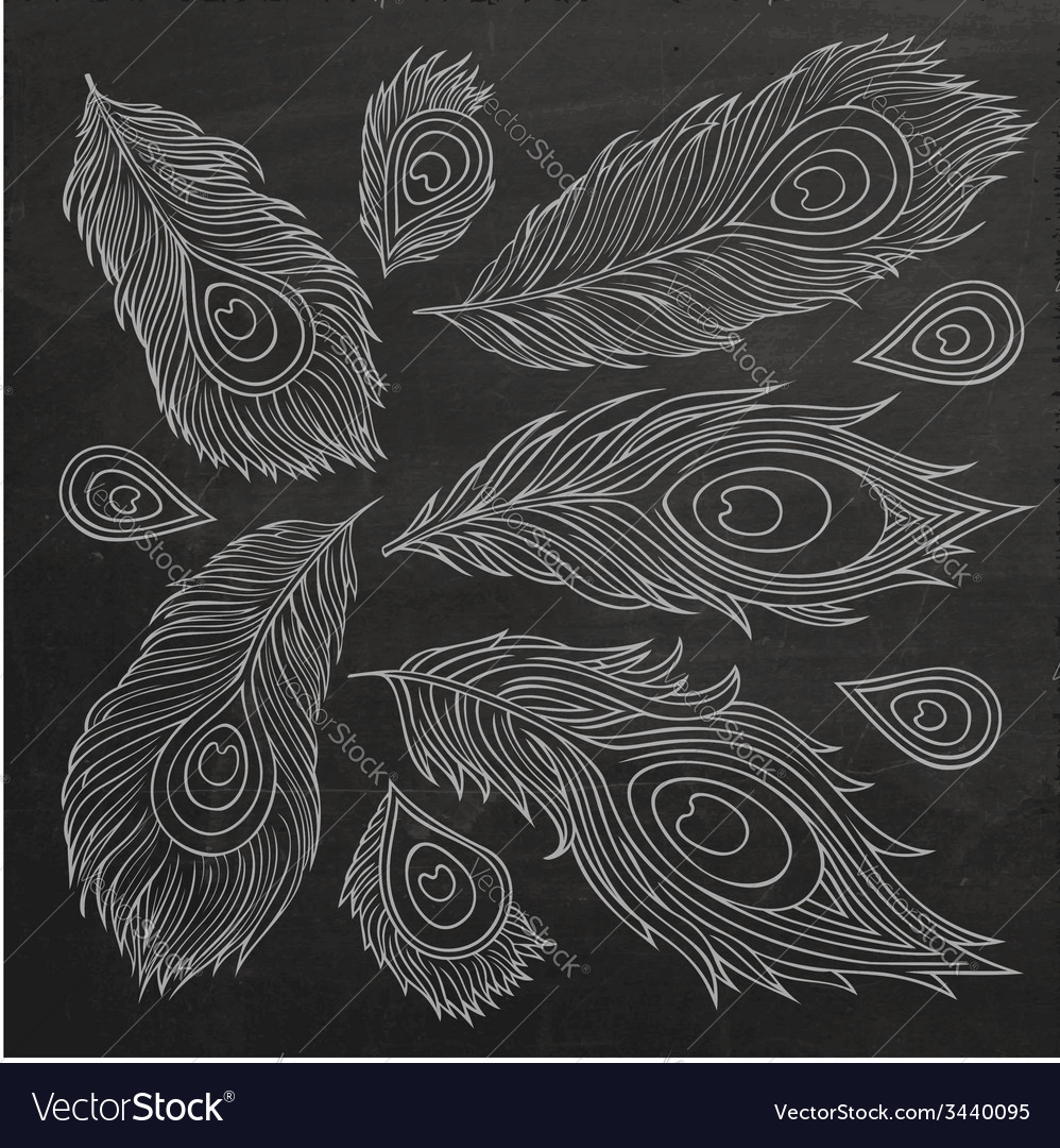 Vintage feather set vector   Price: 1 Credit (USD $1)