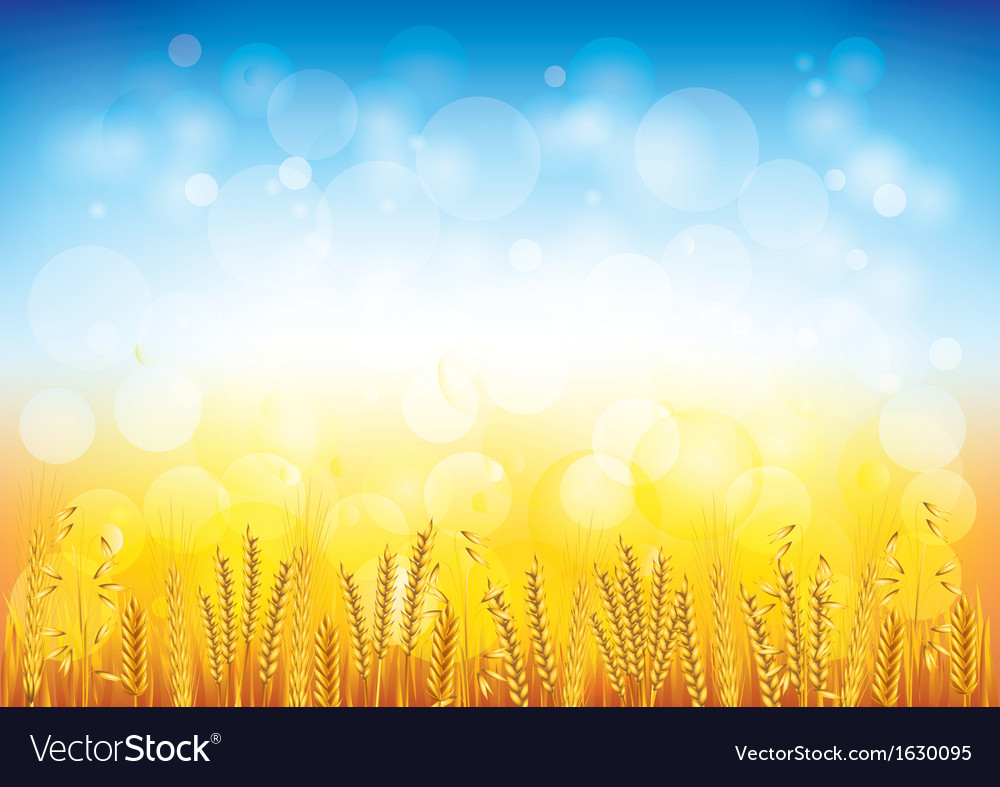 Wheat field background vector | Price: 1 Credit (USD $1)
