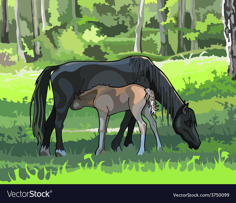 Horse with a foal on the meadow in the woods vector | Price: 3 Credit (USD $3)