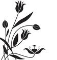 Flower bg vector