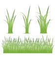 Set of green grass vector
