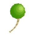 Icon tree vector
