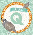 Abc animals q is quail childrens english alphabet vector