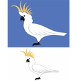 Parrot cockatoo vector