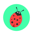 Ladybug on a green background vector