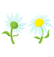 Daisy isolated vector