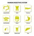Set icons human anatomy vector