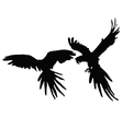 Parrot two black silhouette vector