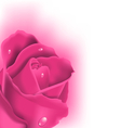 Celebration card with pink rose copy space for vector