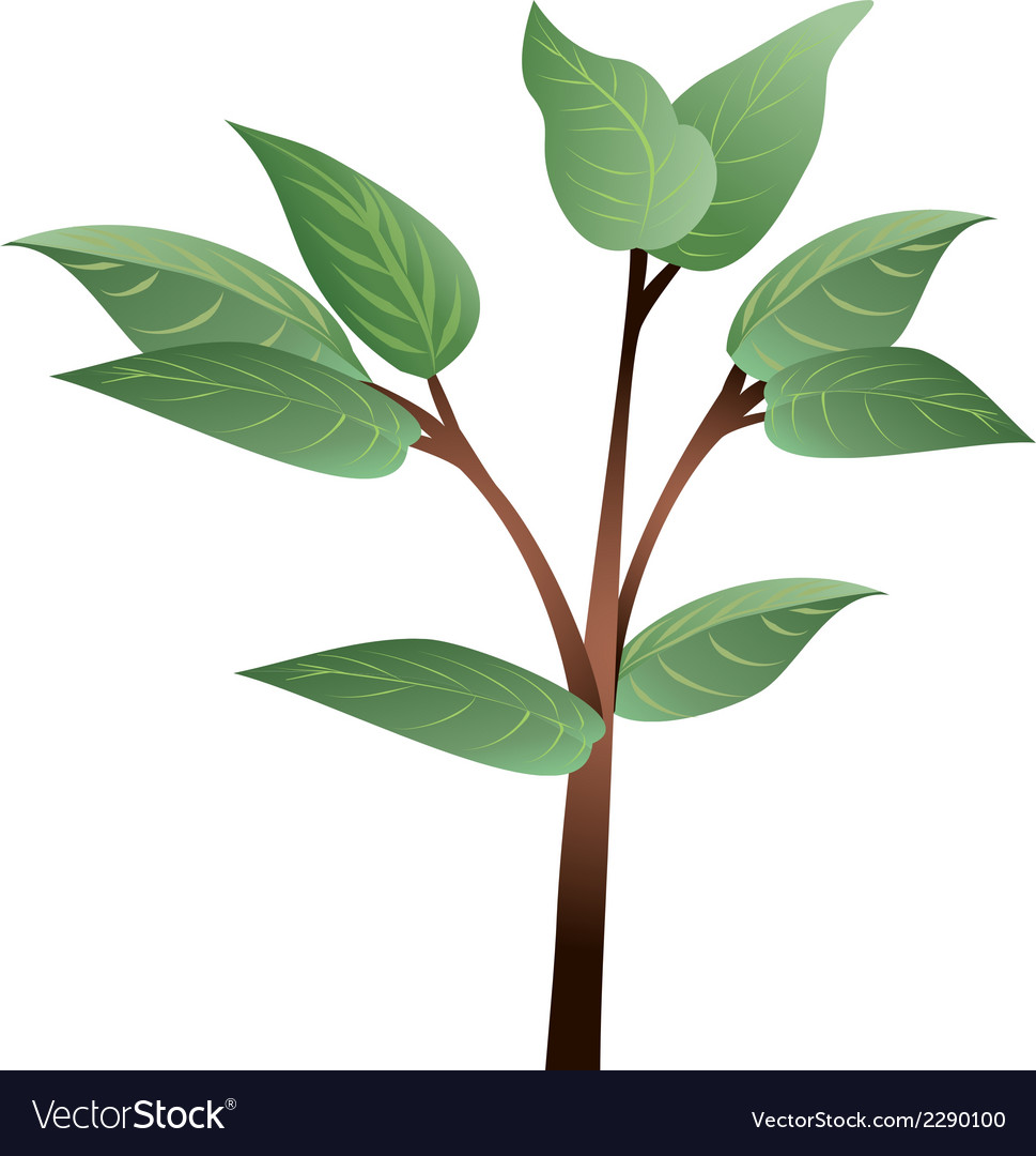 Plant leaves vector | Price: 1 Credit (USD $1)